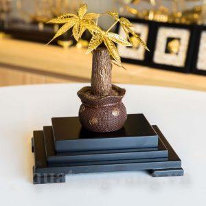 chậu cây bonsai